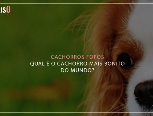 Cachorros Fofos | Qual cachorro mais bonito do mundo?